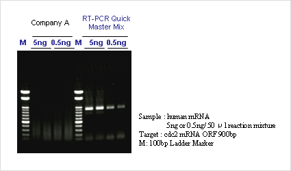 detection of cdc2 mrna using one step rt pcr
